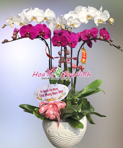 k081 ho diep 6 canh